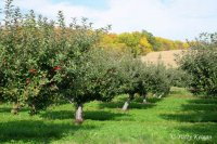Drzewa owocowe
